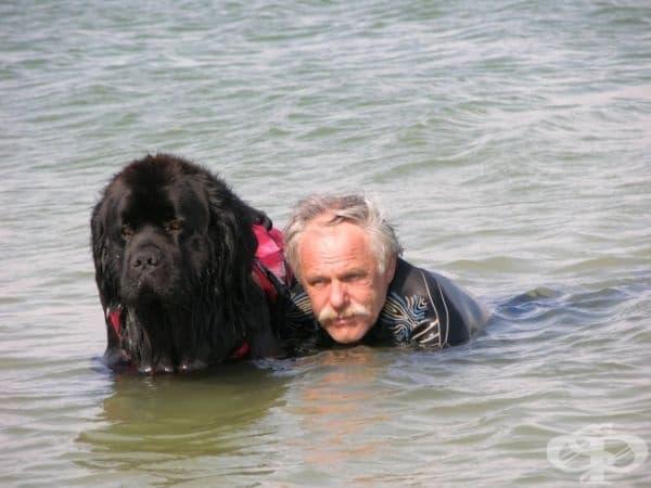 Понякога животът ни може да зависи от тях. Това куче, което носи името Черният Джак, е вписано в книгата за рекордите на Гинес за най-бързо спасяване на удавник. Той успява да измъкне човек от водата само за минута и половина.