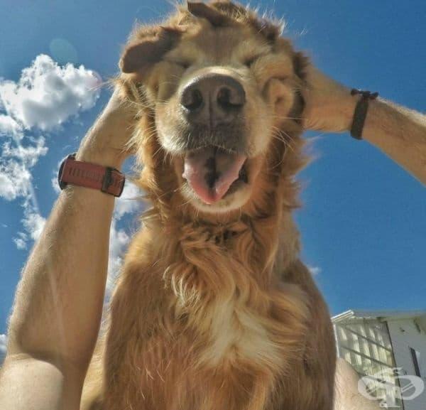 Следвайте примера на вашето куче - винаги бъдете щастливи!