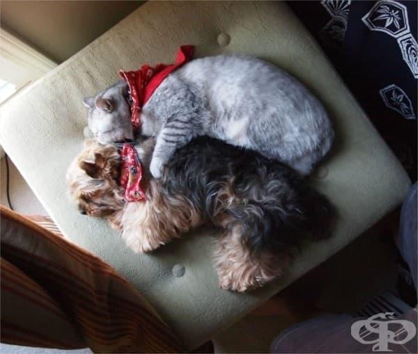 Няма нищо по-хубаво от това да дремнеш с любимия си.
