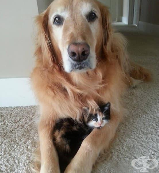 Човеко, да сме наясно, това е моята котка, не твоята.