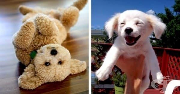 20 от най-сладките кученца в света