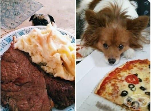 Кучета, които ще ви измъкнат вечерята изпод носа