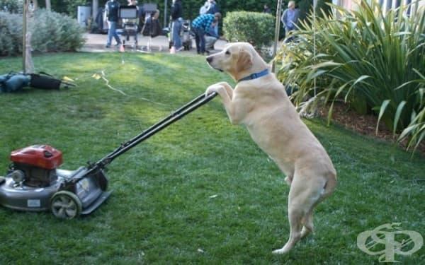 15 кучета, които са убедени, че са хора