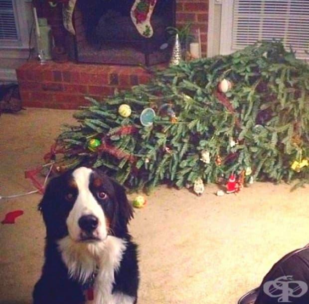 Благодаря на боговете, че се върнахте! Коледното дърво припадна!