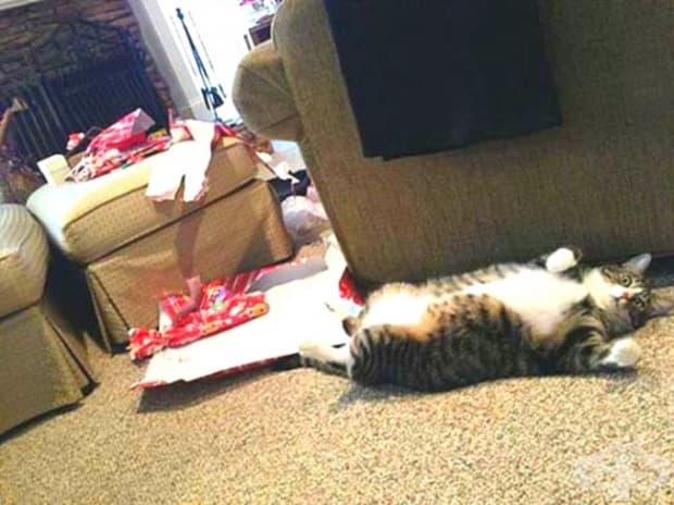 Какво трябва да направите, когато ви хванат да разопаковате подаръците преди Коледа? Много просто – правете се на мъртви.