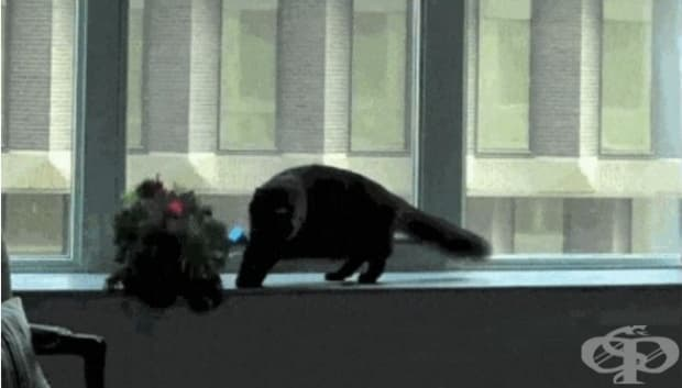 Кой си ти? Я изчезвай от прозореца ми!