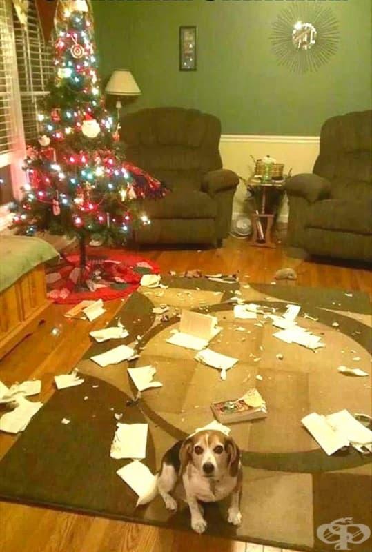 Не съм видял нищо! Беше котката!