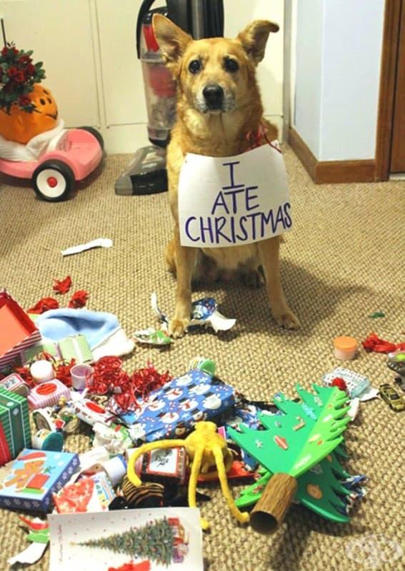 Изядох Коледа!