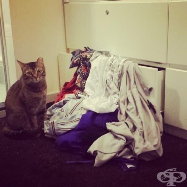 Изглежда някой се опитва да ни открадне прането. Нямам идея кой може да е…