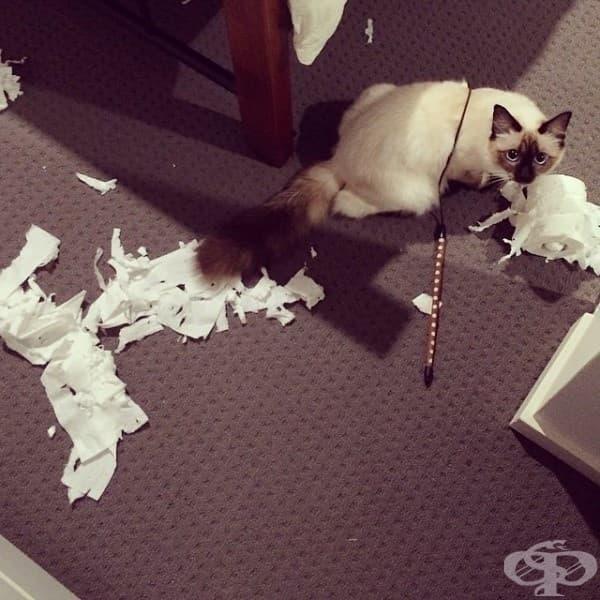 Тази тоалетна хартия очевидно е дефектна.