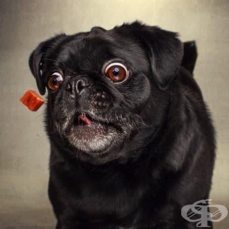 Изключително забавни изражения на кучета, уловени по пътя им към храната