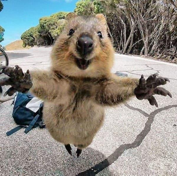 Дай ми една прегръдка!