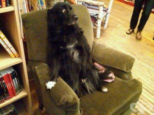 """""""Така изглежда моето куче, когато пускам прахосмукачка."""""""