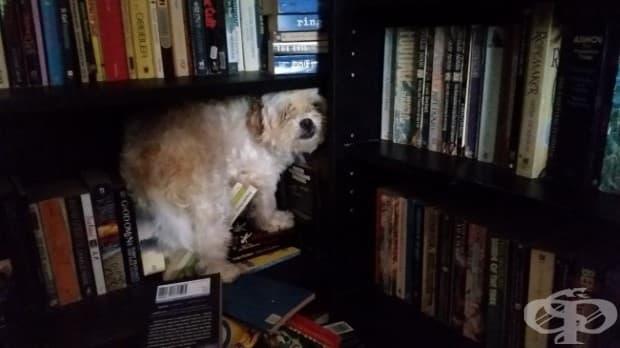 """""""Нашето малко куче се страхува от бури. Но в библиотеката е в безопасност, очевидно."""""""