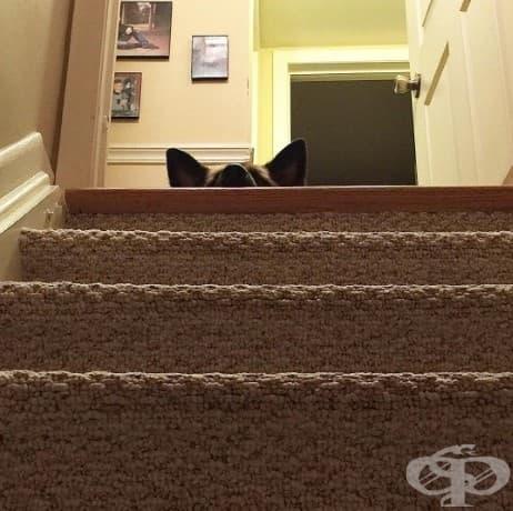 Виждате ли този нос? Той и огромното му тяло се страхуват да слязат по стълбите!