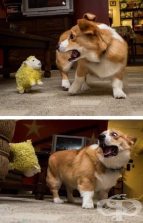 """""""Тази скачаща, катереща се овца подлудява Отис."""""""