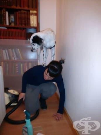 """""""Кучето ми мисли, че това е най-доброто място да се скрие от впрахосмукачката."""""""