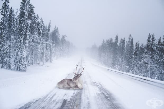 20 причини защо Дядо Коледа живее в Лапландия