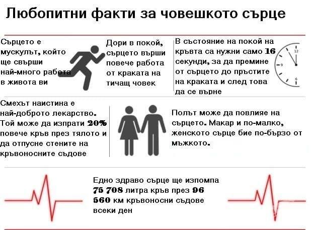 Любопитни факти за човешкото сърце, от които ще останете смаяни