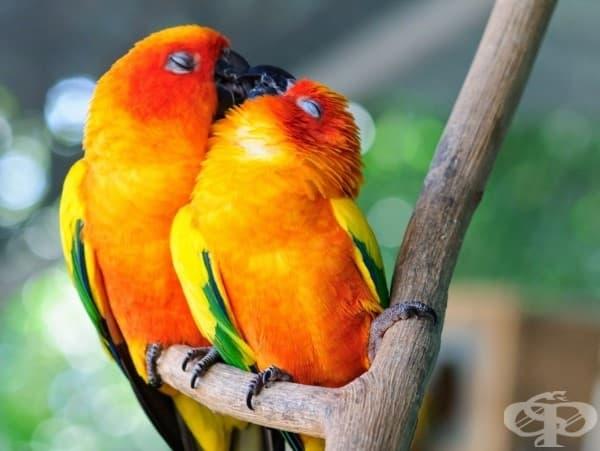 Тези папагалчета се обичат до безумие.
