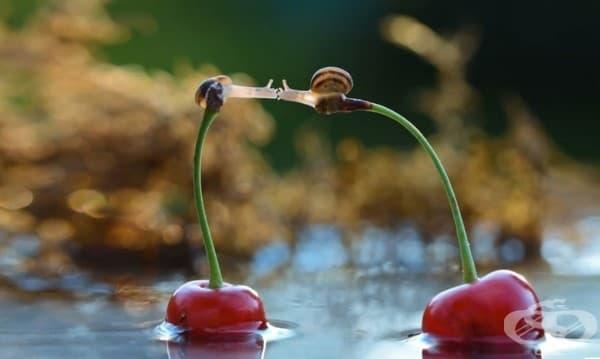 Любовта не знае какво е разстояние, граници или препятствия!