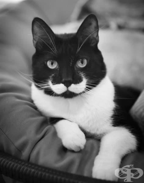 Еркюл Поаро си е изсветлил мустака.