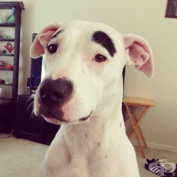 Да, оправих си веждите. Какво мислите?