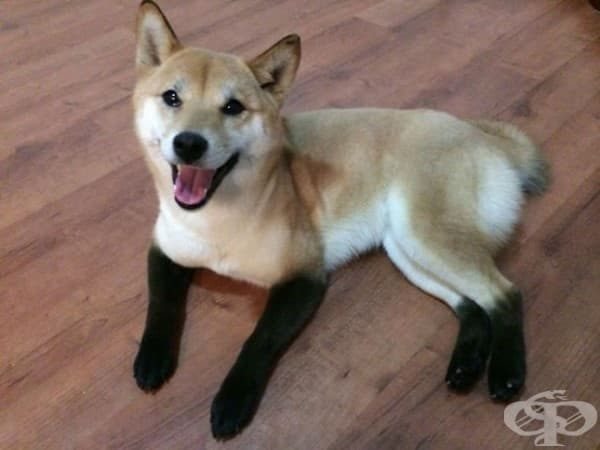 Купих си чорапки за зимата.