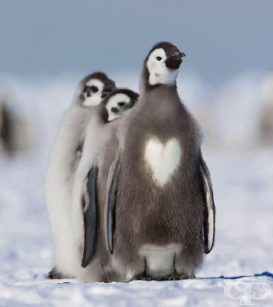 Покажи им цялата си любов