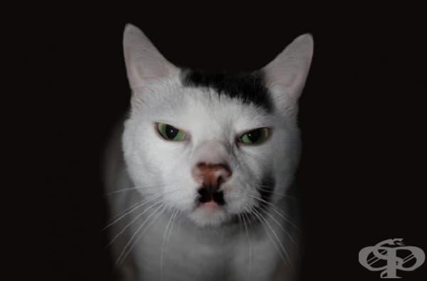 Котешкият фюрер