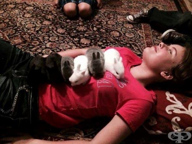 Някои обожават животните.