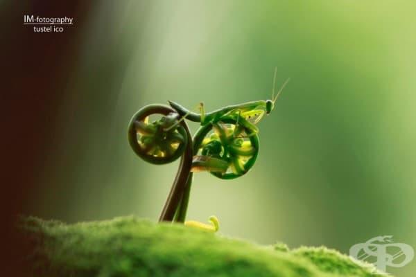 20 фантастични макро фотографии, които ще преобърнат представите ви за света