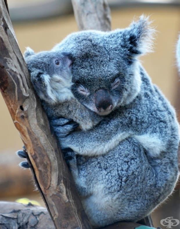 Тя знае истинската сила на майчината прегръдка.
