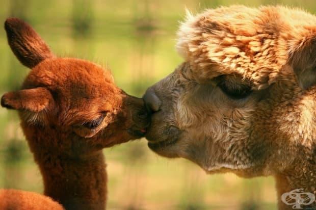 Целувките й са най-нежните на света.