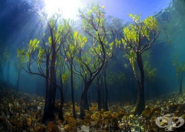 Манго, растящо под вода.
