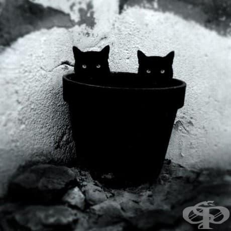 Мистериозният живот на котките, уловен в черно и бяло