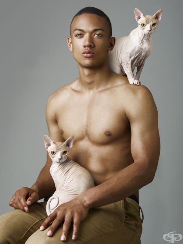 Какво искат жените: голи мъже с котки
