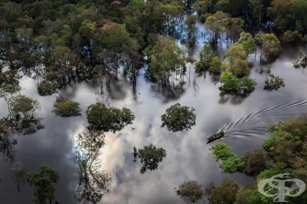 Национален парк Анавилянас, в близост до река Амазонка, Бразилия.