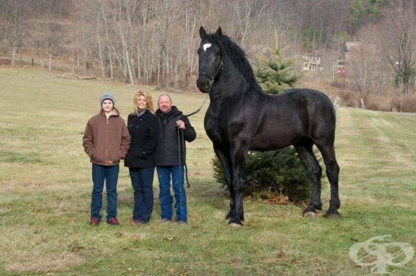 Този кон от порода першерон е световен шампион: Този огромна кон е 193 см висок и е световен шампион по ясна причина.