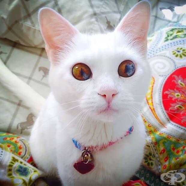 Коте с очи като вселена
