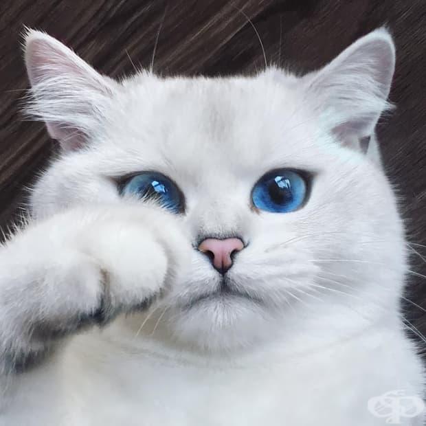 Коби – котката с най-хубавите очи