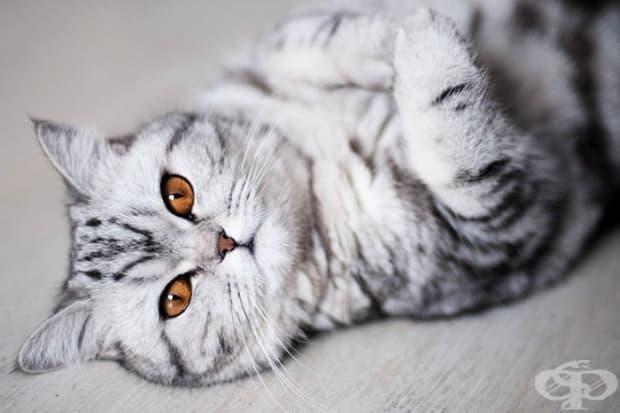 Тези очи