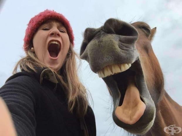 Вижте снимките от първия конкурс за най-смешен домашен любимец
