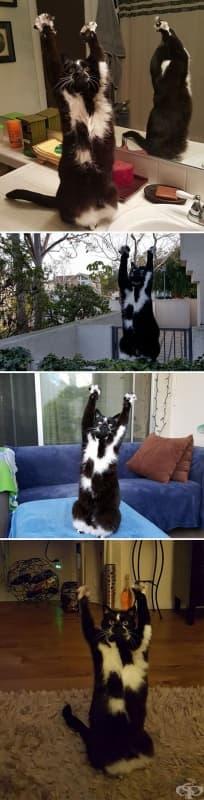 Котката на приятеля ми прави това постоянно.