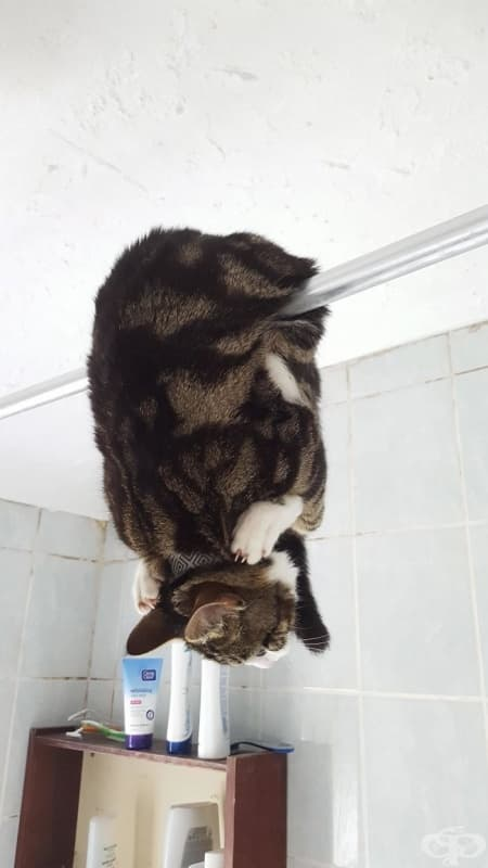 Ето така един приятел намери котката си в банята.