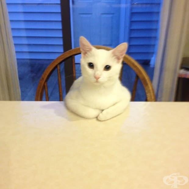 Ето как котката ми се моли за храна.