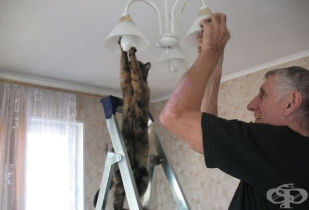 Колко котки и евреи са необходими за подмяната на една крушка?