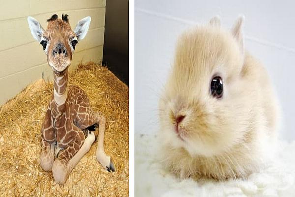 Най-сладките бебета животни на планетата - изображение