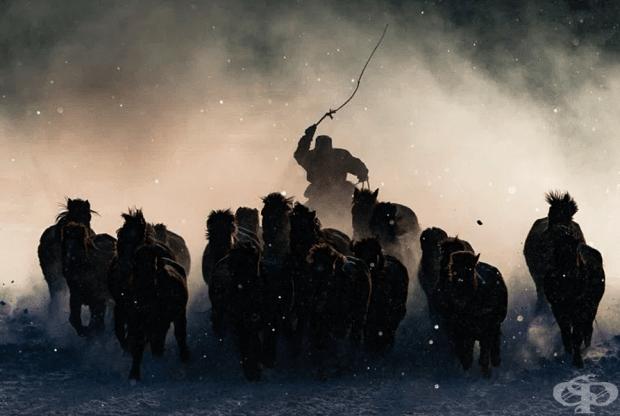 Голямата награда /Антъни Лау/ Монголия