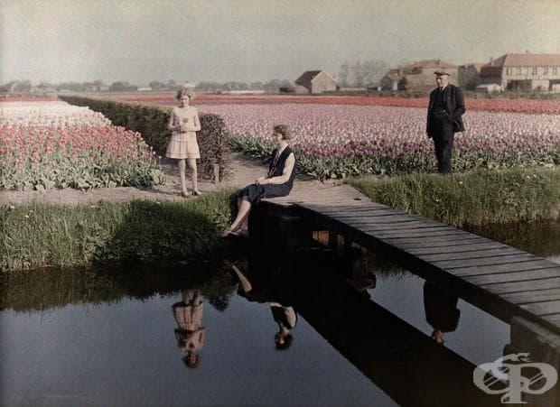 Местни жители разпускат до полета с лалета покрай канала В Харлем , Холандия, 1931